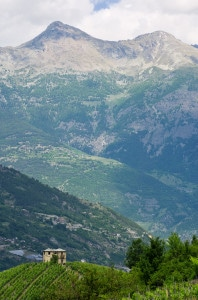 153533599-Valle d'Aosta vineyards