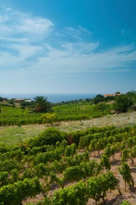 167289165-Seaside vineyard