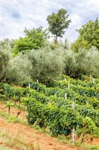 170622968-Mixed agriculture in Marche