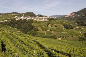 177398980-Trentino vineyards with Verla village in distance