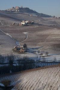 177431561-Piedmont vineyards in winter