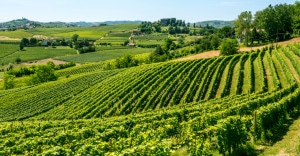 180272185-Langhe hills and vineyards