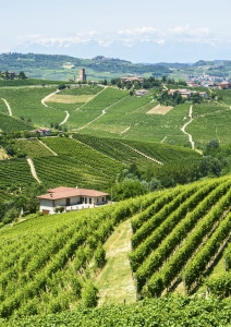 186999301-Langhe hills and vineyards