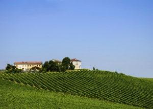 452468697-Vineyard in Prosecco