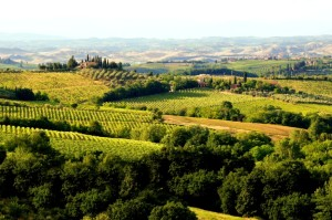 469690989-Tuscan hills and vineyards