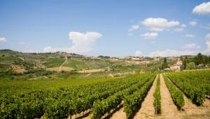 496476851-Tuscan hills and vineyards
