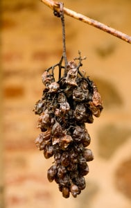 99708945-Dried grapes