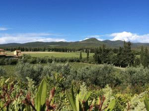 Vineyards at Ca' Marcanda
